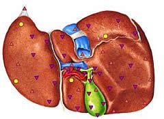 Beispielhafter Scan einer Leber mit Gallenblasen und Gefäßen durch Vitascanning DSAM